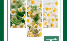 绿色清新你好五月励志日签游记相册H5模板缩略图