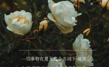 清新文艺风企业微商个人盛夏心情日签宣传手机海报缩略图