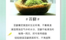 绿色小清新风格苔藓养护知识科普海报缩略图