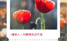 红色简约风格鲜花寓意花语海报缩略图