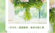 绿色清新风格鲜花寓意花语手机海报缩略图