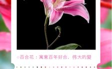 粉色唯美风格鲜花寓意花语手机海报缩略图