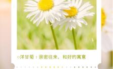 黄色明亮风格鲜花寓意花语海报缩略图
