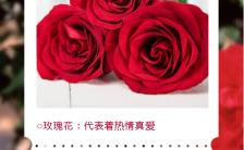 红色唯美大气鲜花寓意花语海报缩略图