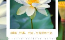 绿色小清新风格鲜花寓意花语手机海报缩略图