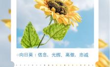 蓝色小清新风格鲜花寓意花语手机海报缩略图