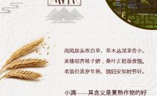简约中国风小满二十四节气创意海报日签缩略图