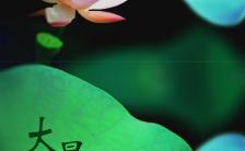 大暑节气问候实景莲花夏天手机海报缩略图