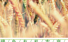 清新自然简约时尚农产品企业公司介绍推广缩略图