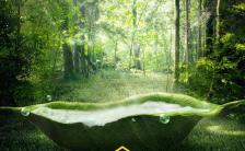 绿色森林自然小清新简约不简单旅游项目宣传缩略图
