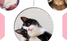 日系清新猫咪狗狗爬行动物鸟类日记萌宠相册缩略图