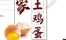 有机农场农家土鸡蛋促销宣传推广H5模板缩略图