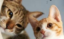 恋爱的季节猫咪相册记录手机海报缩略图
